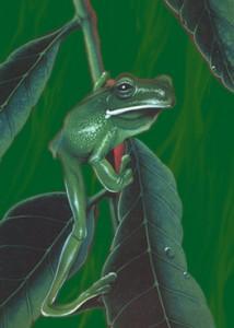 Ein Frosch (Airbrush auf Zeichenkarton)